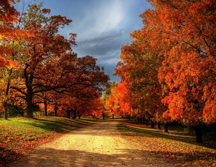 nature-wallpapers-fall-leaves-photography-wallpaper-30959